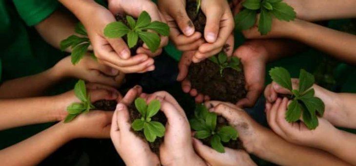 IAS Tech : Un acteur engagé dans la protection des forêts