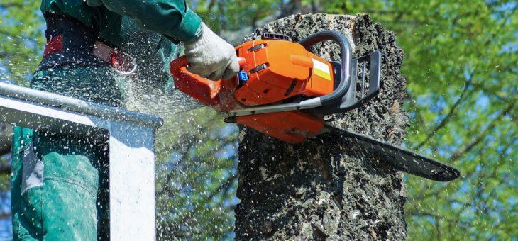 Couper un arbre pour mieux replanter
